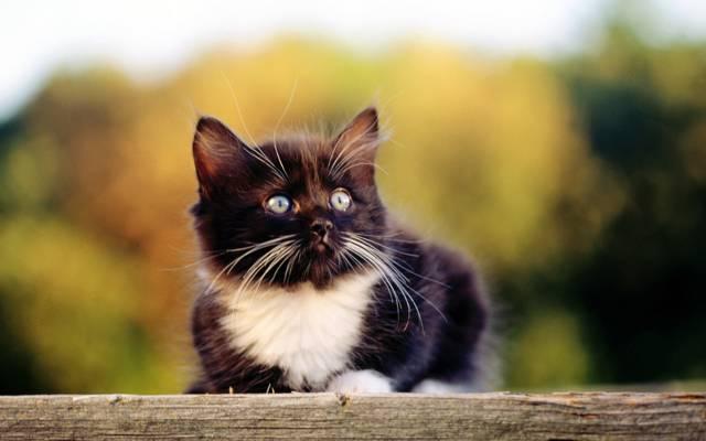 猫,猫,科特,小猫,小猫,黑色,小猫,猫
