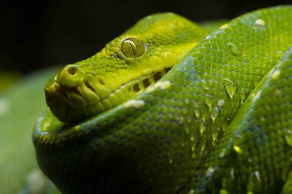 Vi蛇蛇高清壁纸的宏观摄影