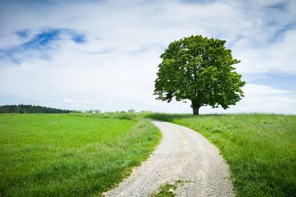 树,草地,性质,夏天,路,板栗