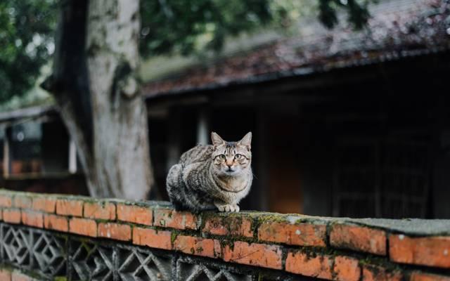 猫,条纹,看起来,猫