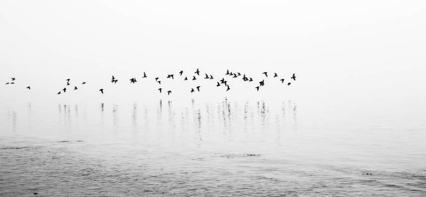 在水体照片高清壁纸黑鸟