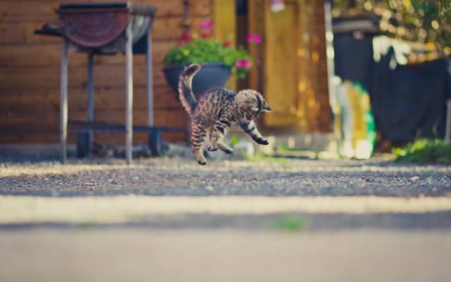 跳转,背景,小猫