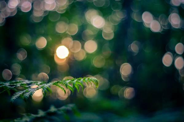 宏,枝,光,性质,叶子,散景,小枝,晚上