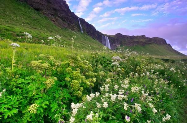 花,早上,山,瀑布,绿色,冰岛,丁香,蓝色,丘陵,天空,草,云