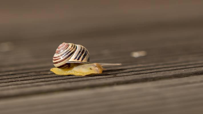 蜗牛在地面上高清壁纸