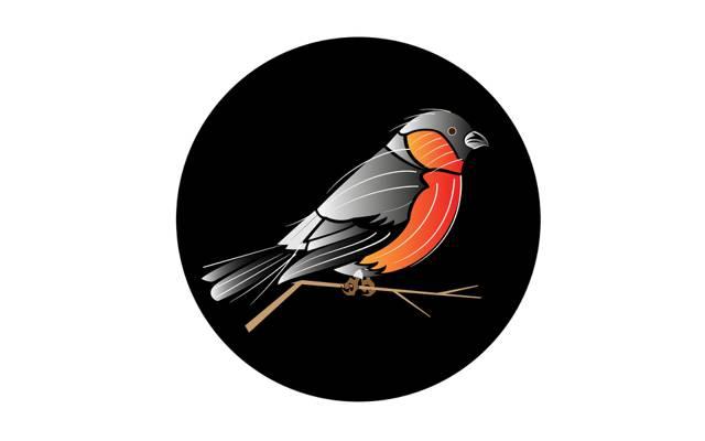 鸟,一轮,分支
