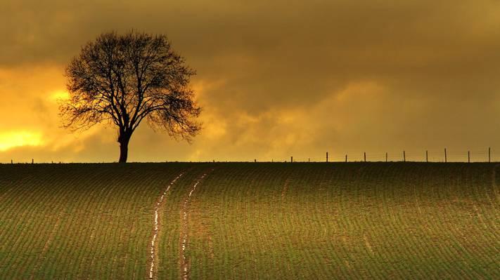 树,天空,田地,云