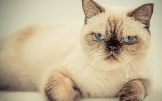 猫,看,枪口,他是一个严肃的人,猫