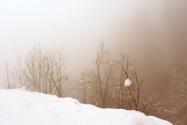 冬天,雪,雾