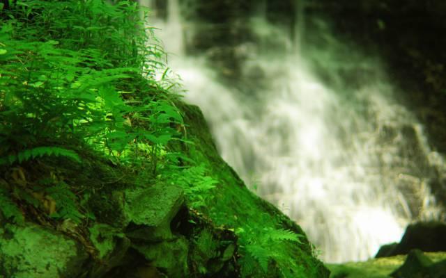 岩石,水,绿色,植物,瀑布,草,苔藓