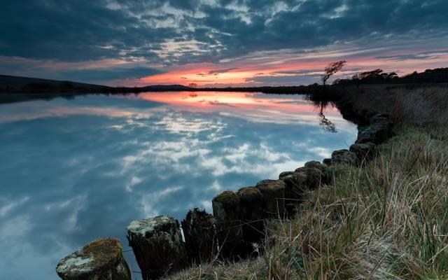 树,晚上,湖,天空,日落