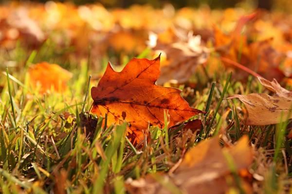 宏,草,秋天,叶子