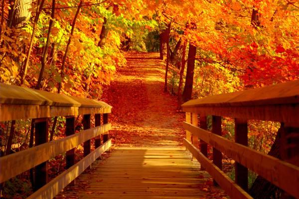 白天高清壁纸棕色木桥的摄影