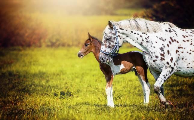 马,背景,性质