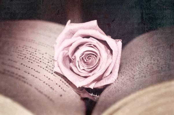 粉红色,照片,治疗,页面,书,花,玫瑰