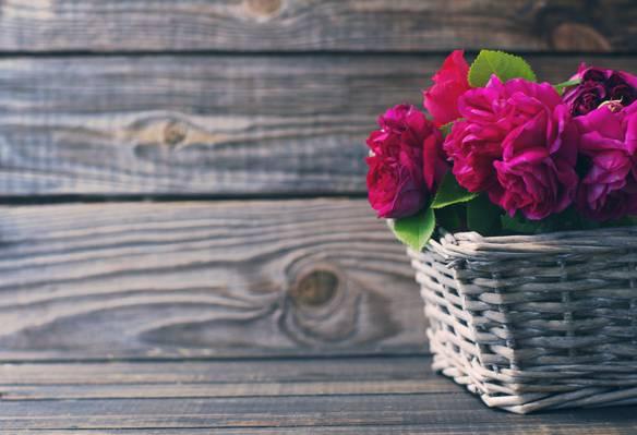 粉红色,鲜花,木材,粉红色,篮子,美丽,玫瑰