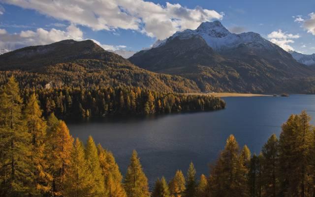 森林,秋季,阿尔卑斯山,锡尔斯湖,湖泊,树木,Sils im Engadin,锡尔斯湖,锡尔斯湖