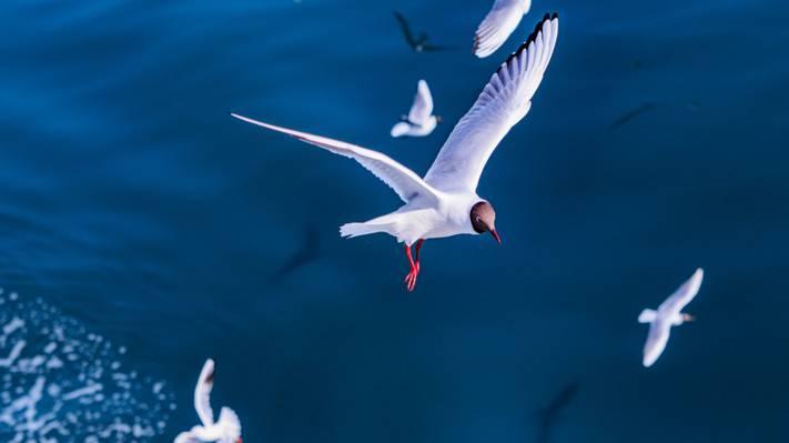 壁纸海,海鸥,鸟,飞行