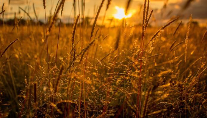 日落时分的棕色草高清壁纸