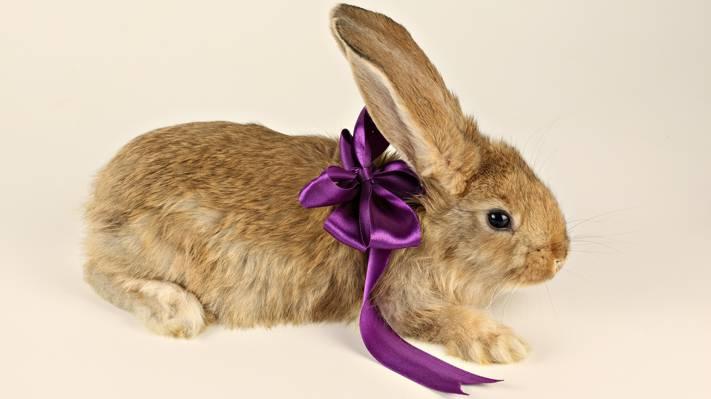 弓,腿,礼物,耳朵,兔子,弓,紫色