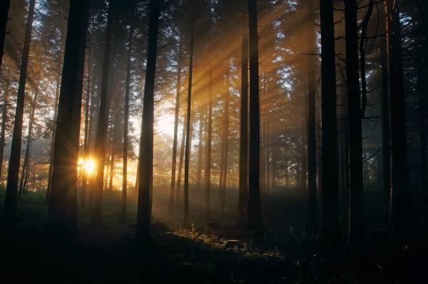太阳,光线,光线,森林,自然