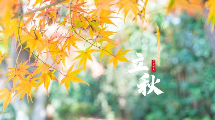 传统二十四节气之立秋
