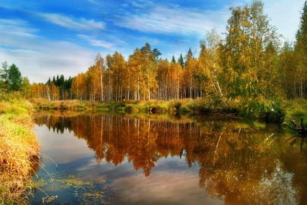 自然,水,秋天,森林,反思
