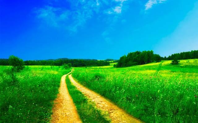 与路径HD墙纸的绿草领域