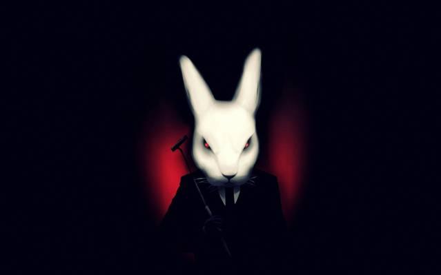 黑暗的背景,不适合,艺术,兔子,白色,服装