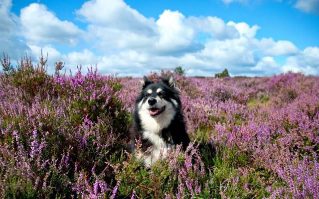 狗,夏天,花,每个