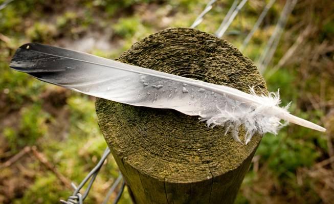 灰色和白色的羽毛,棕色木材日志高清壁纸