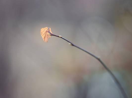 棕榈叶高清壁纸的倾斜移位摄影