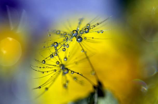 鲜花的微型照片滴露高清壁纸
