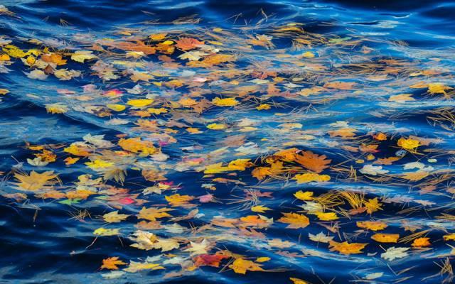 针,秋天,水,流,河,叶子