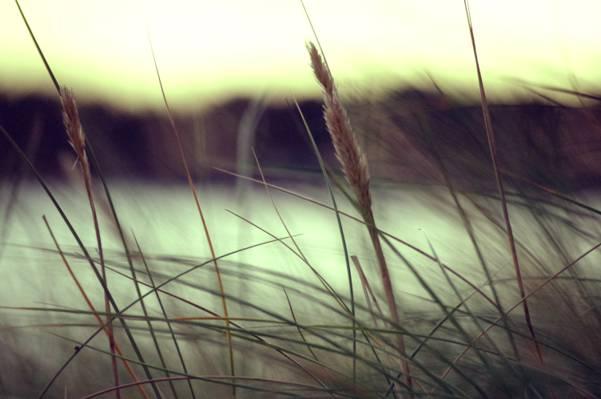 选择性焦点摄影的绿叶植物高清壁纸