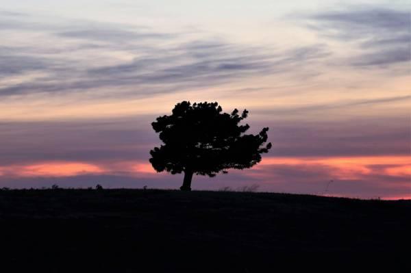 一棵站成孤独的树
