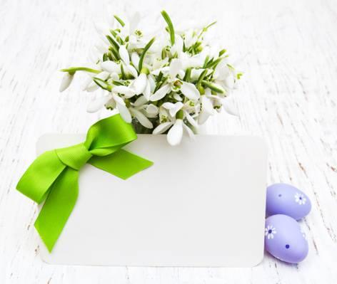 鸡蛋,春天,鲜花,复活节,鸡蛋,复活节,卡,雪花莲