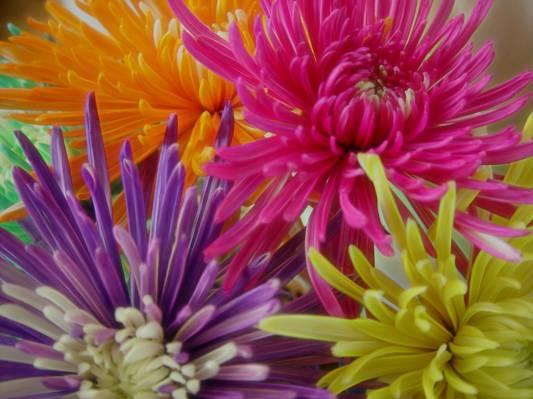 紫色,橙色和黄色的花朵高清壁纸
