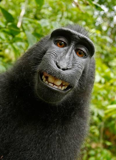 黑色的猴子高清壁纸浅焦点摄影