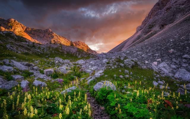 日落,山,鲜花