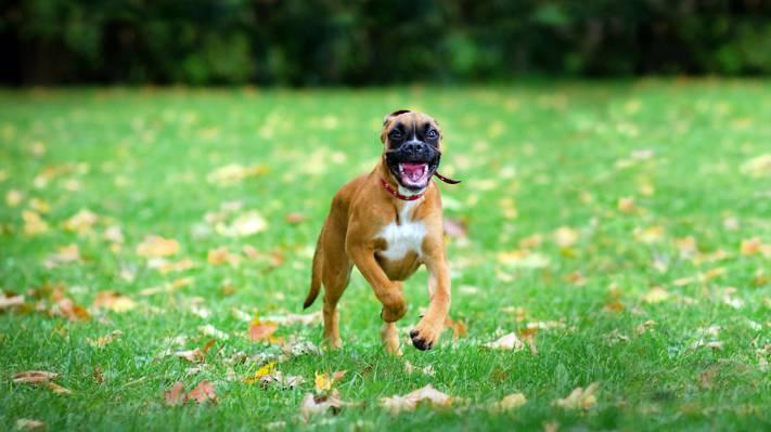 口,草,绿,跑步,喜悦),脸,狗,背景,森林,游戏