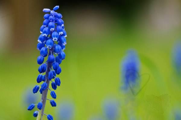 蓝色花高清壁纸