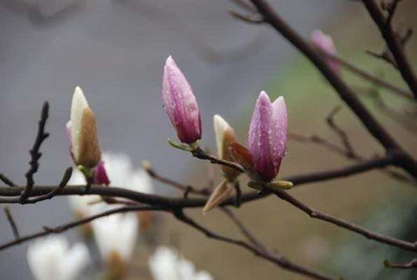 粉红色的花茎干高清壁纸