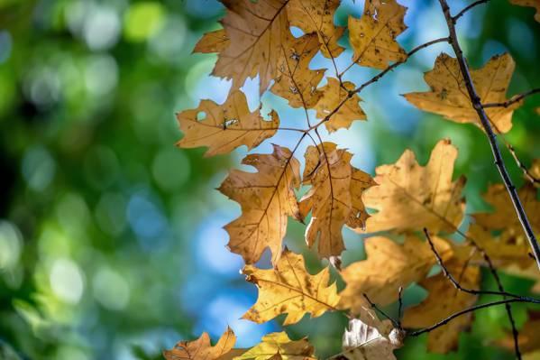 秋天,叶子,性质