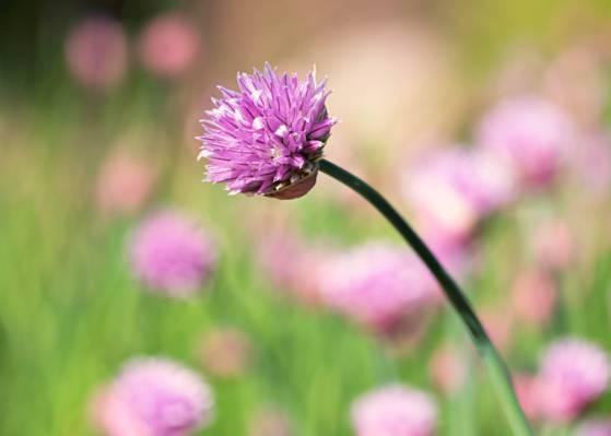 紫色的花,在一天时间高清壁纸