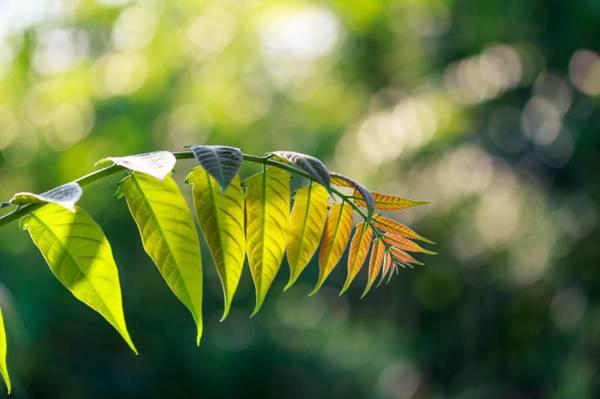 绿叶植物高清壁纸浅焦点摄影