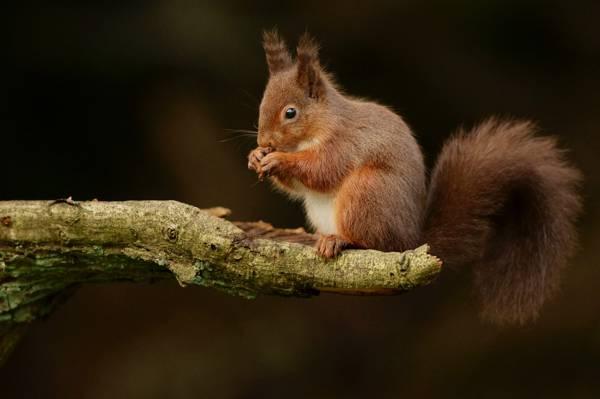 棕色松鼠在树枝上,鲈鱼高清壁纸