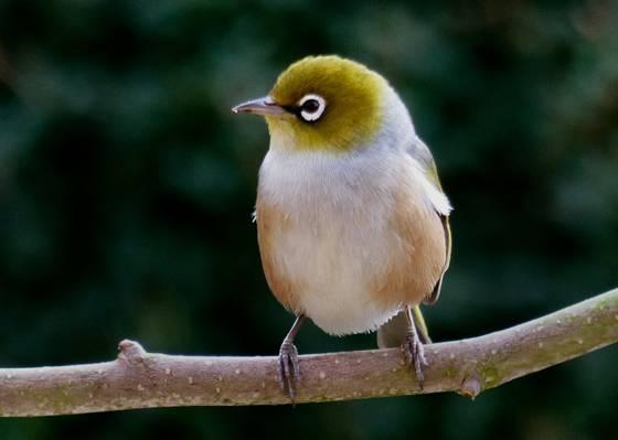 白色,棕色和绿色的鸟在树干高清壁纸
