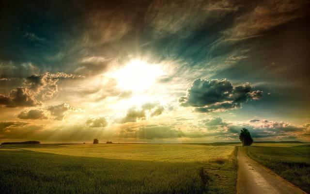 平原,树,日落,草地,田野,绿色,太阳,云,天空,光,道路,雷,黎明