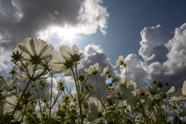 在白天高清壁纸白色雏菊在蓝色和多云的天空下